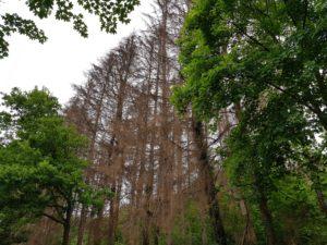 Waldsterben oder Neuartige Waldschäden