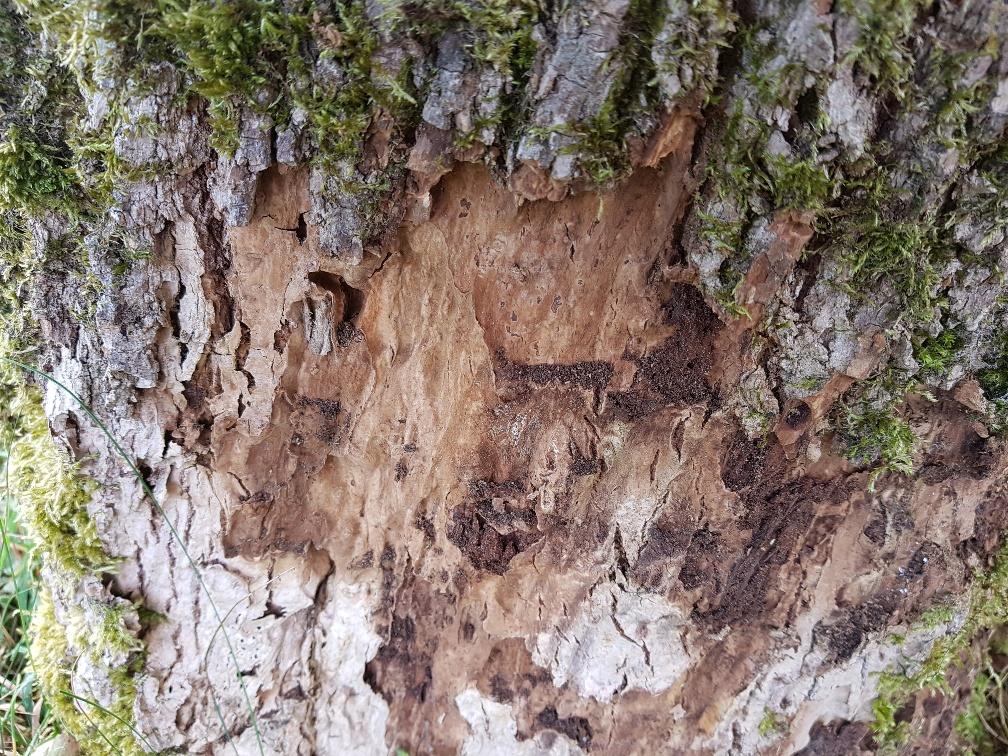Waldsterben 2.0 – Neues