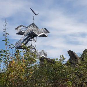 Wanderung mit Loreleyblick und Blauflügeliger Ödlandschrecke